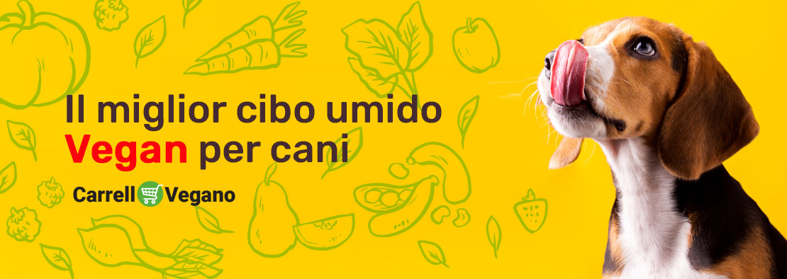 Immagine per il banner dell'articolo per cibo umido per cani
